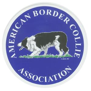 border collie puppy NH